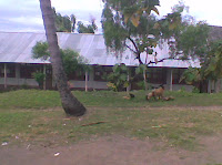 education school islam,islamic school,lombok islmic school,lombok islamic center,center school in lombok