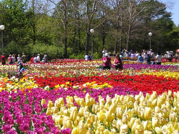 Famous Flower Villages in Dalat