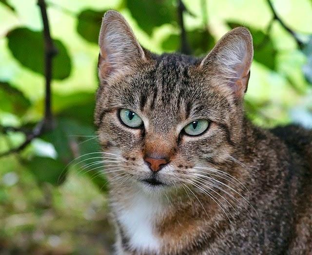 Cat Care Society Blog