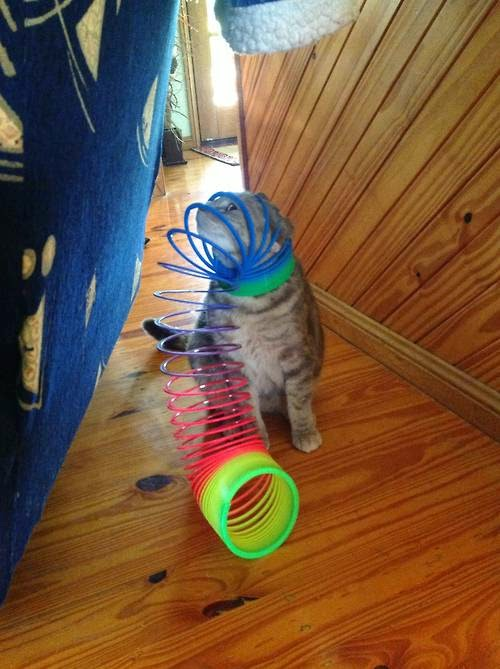 Cat stuck in slinkies