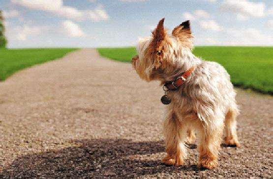 cachorro1.jpg