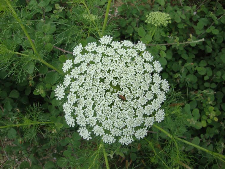 fractal...??? ...στα Ελληνικά λέγεται μορφόκλασμα ή μορφοκλασματικό σύνολο...!!!