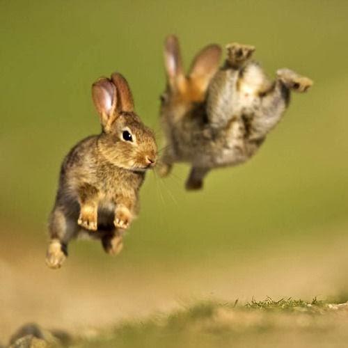 http://www.pinterest.com/gmanzato/animals/