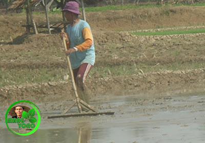 "Nyorogan upah atau ""bayaran"" berupa uang dari pemilik lahan sebesar 40 ribu per setengah hari."