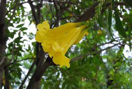 Monsoon in Mandi!!!!!!!!!!!