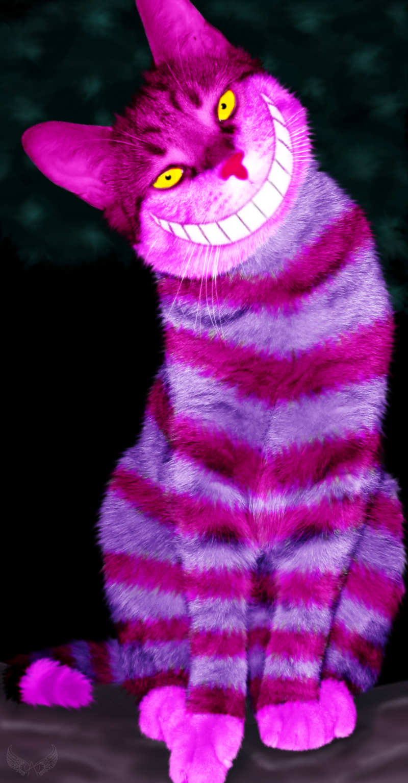 Pictures Of Real Cheshire Cat