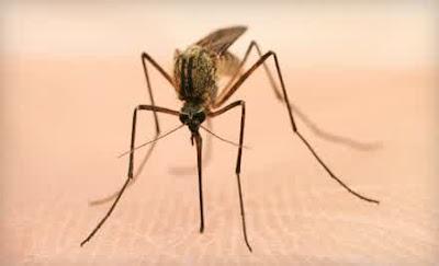 Begini Cara Nyamuk Memburu Korban