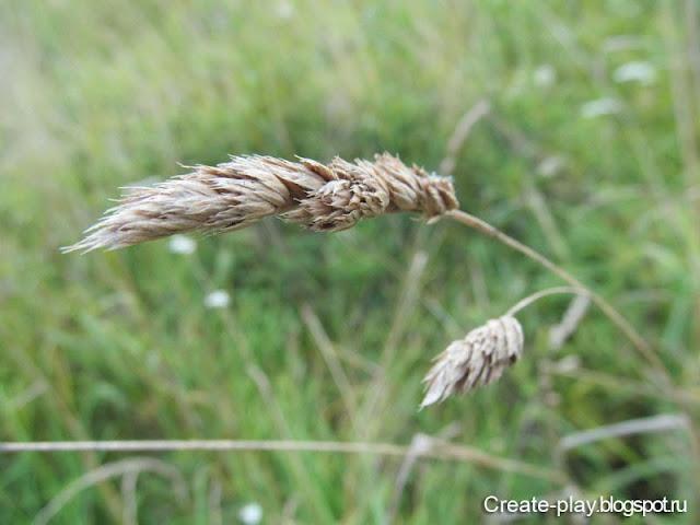 трава в поле