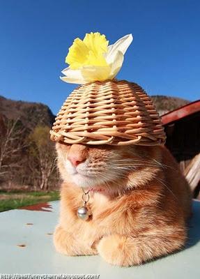 Very funny cat.
