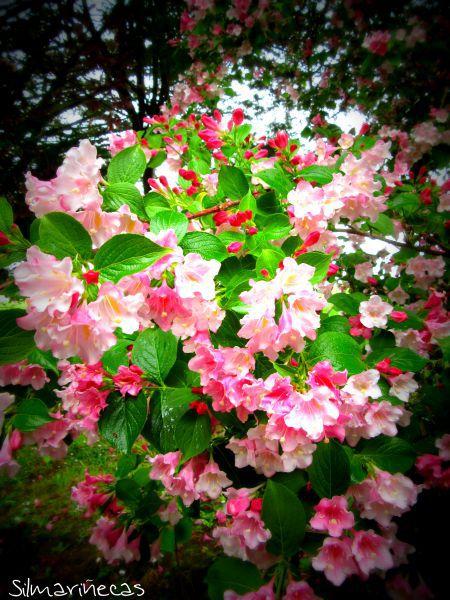 flores del aparcamiento de Venta Halty