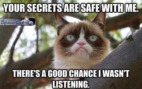 funny grumpy cat humor
