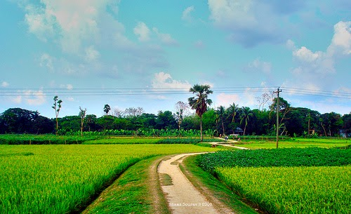 bangladesh village picture