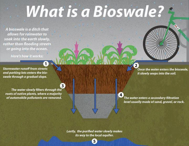 What is a bioswale and how is it useful for rainwater for What is drainage system