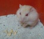 Hamster Hybrid