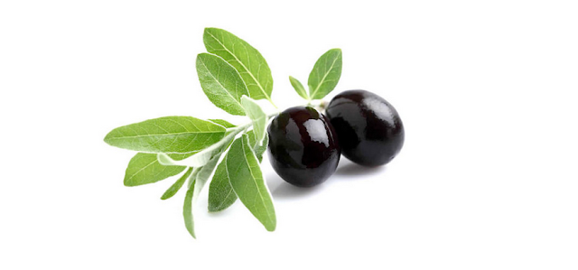 olive leaf antioxidant
