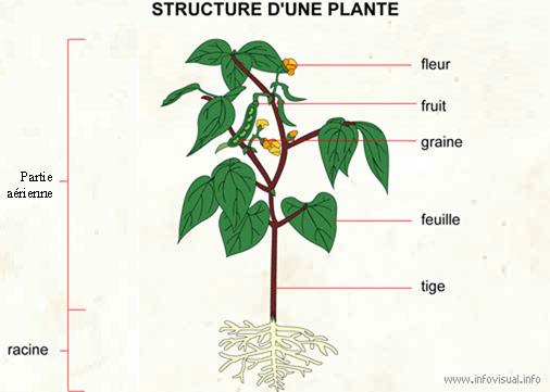 Quoi de neuf en svt par ma tre corydon muttaburrasaurus for Plante 21 svt