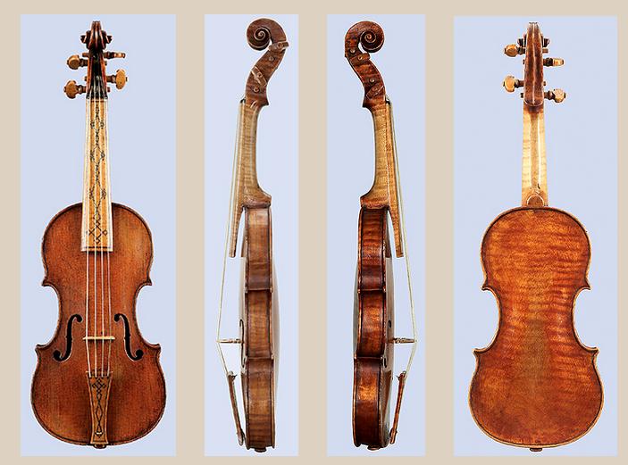 The violin shop your violin neck used to be shorter - Volpino piccolo ...