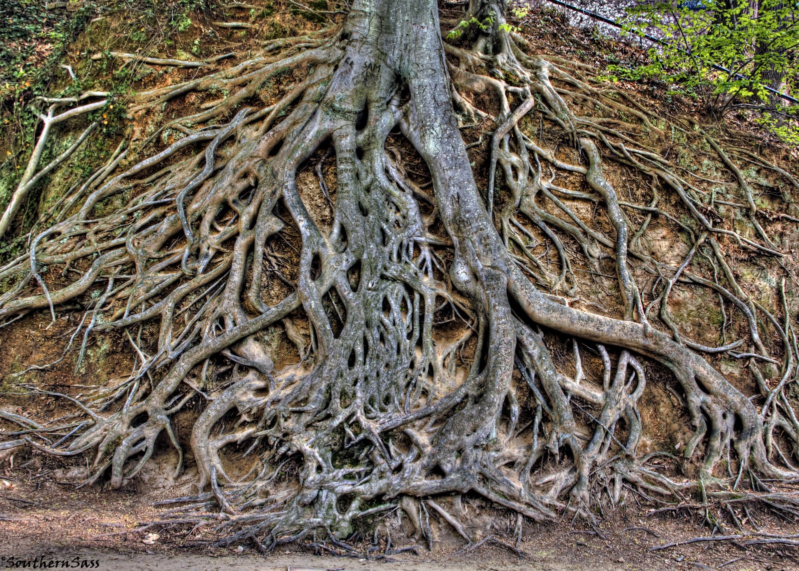 roots of this tree.