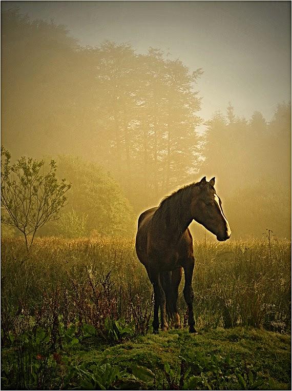 emphoka, photo of the day, Vince Hopson, Nikon Coolpix P7100
