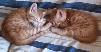 Mis dos nuevos gatitos