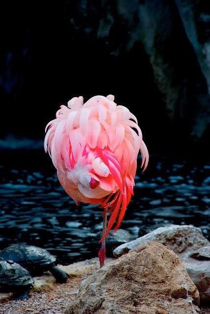 rosa e coral