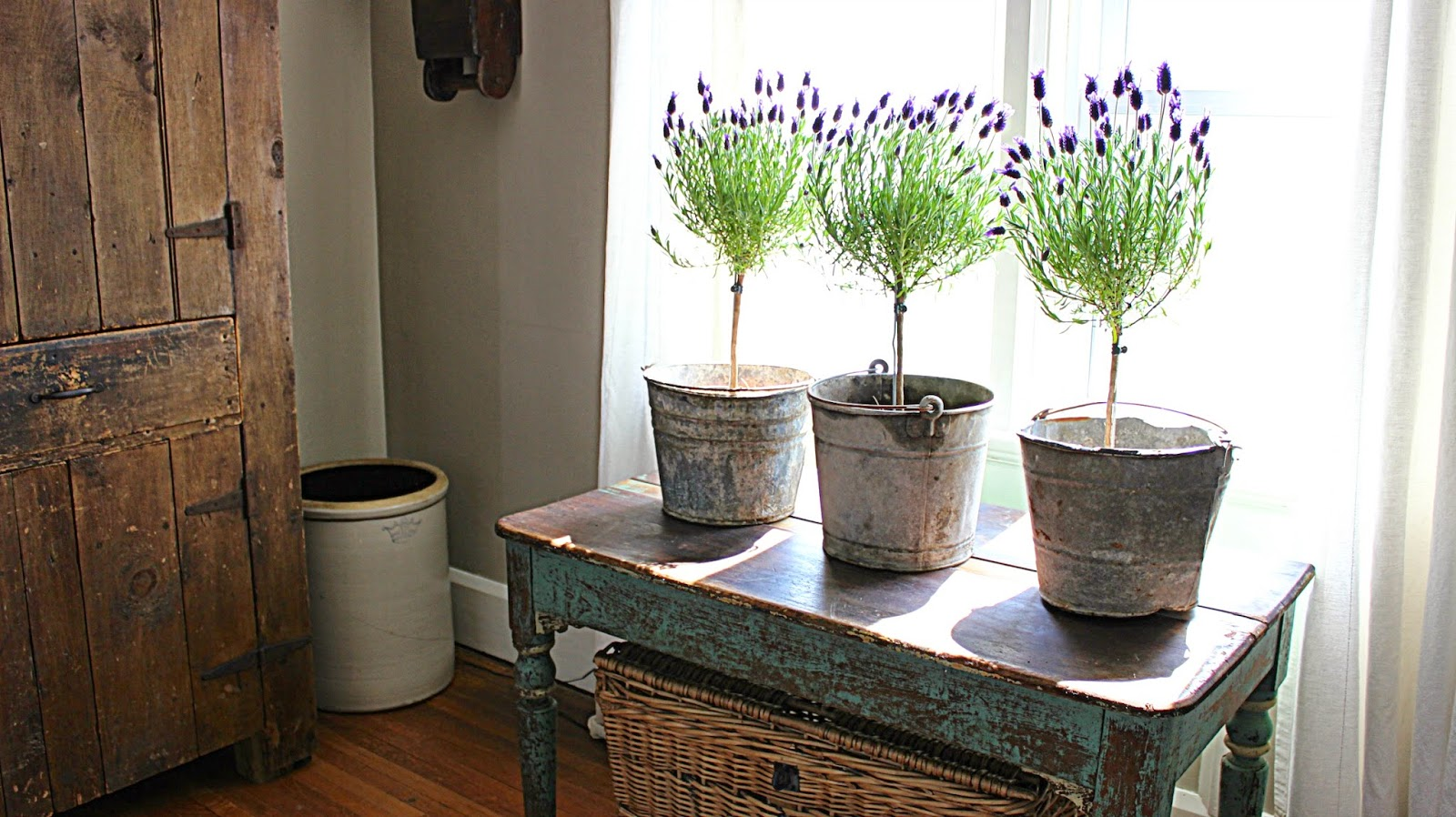 Thursday 8 May 2014 Rustic Farmhouse Lavender