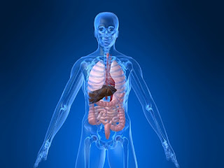 Jadual Waktu Sistem Tubuh Badan Manusia