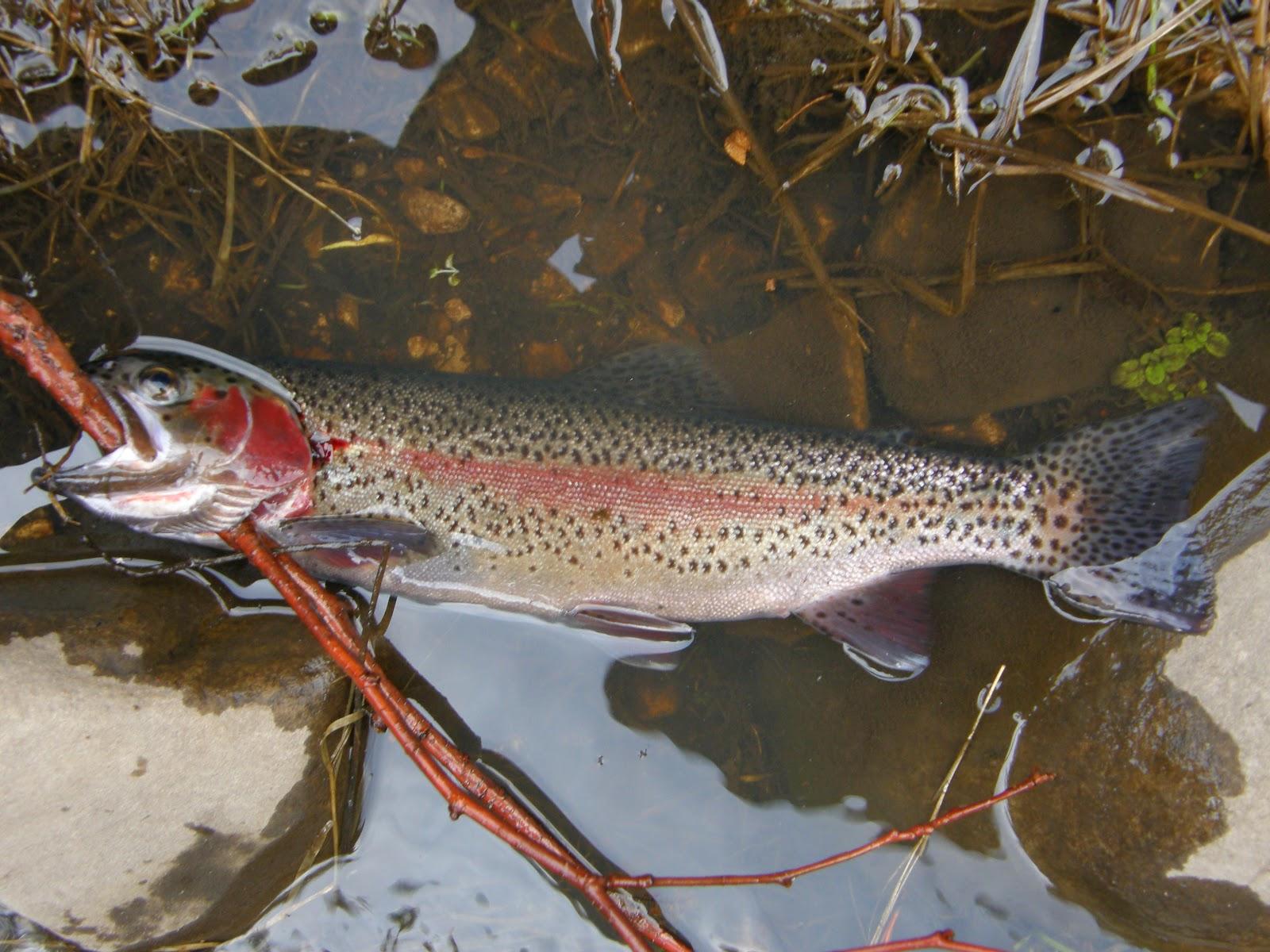 Oak creek angler april 2012 for Clear creek fishing