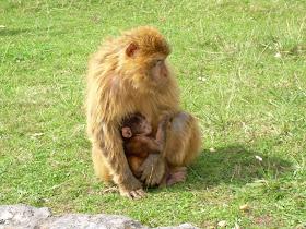 La maternidad es algo maravilloso.