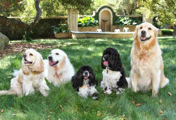 Oprah's dogs : Sunny, Lauren, Sadie, Luke and Layla