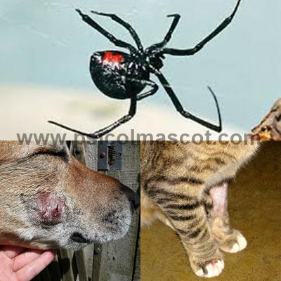 PSICOLMASCOT: Proteja a sus mascotas de estas arañas