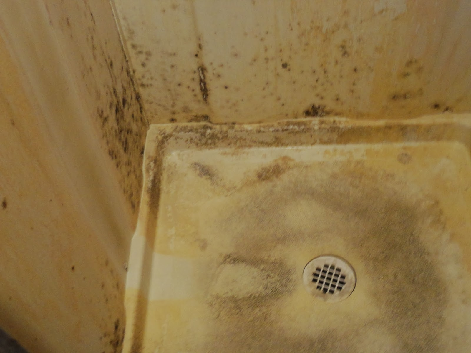 Black mold on bathroom tile 2017 2018 best cars reviews for Mildew on walls in bathroom