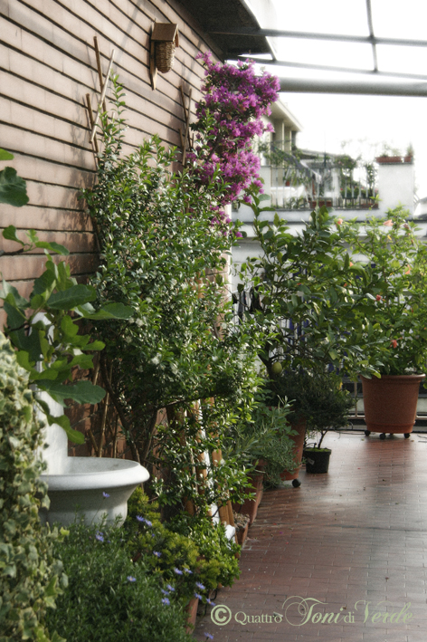 Quattro toni di verde: Due terrazzi fa...