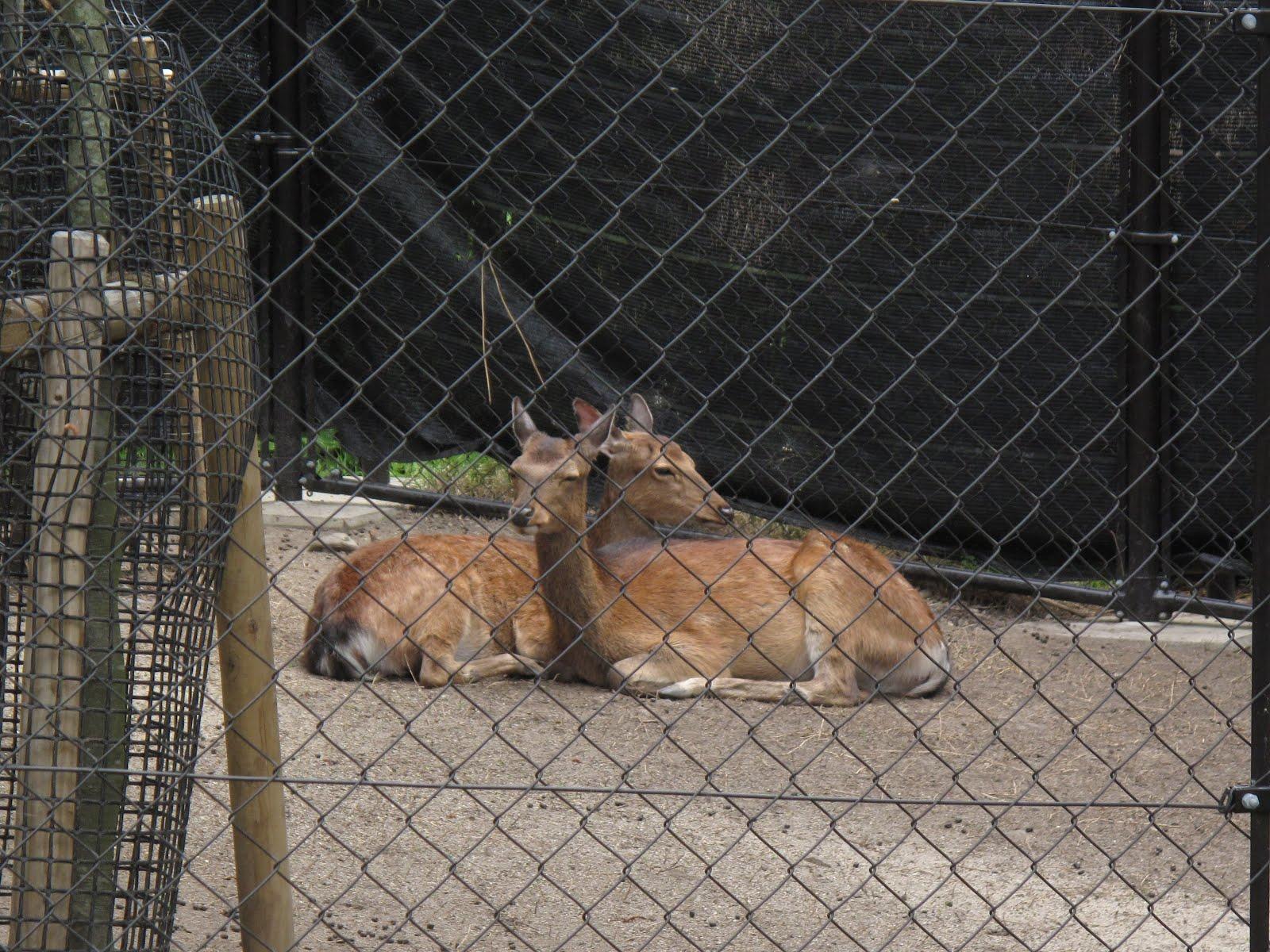 京都 市 動物園