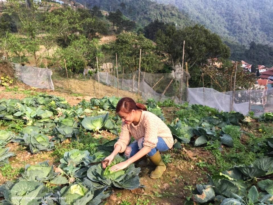 Ca sĩ Hoàng Thùy Linh nô đùa bên vườn rau 8