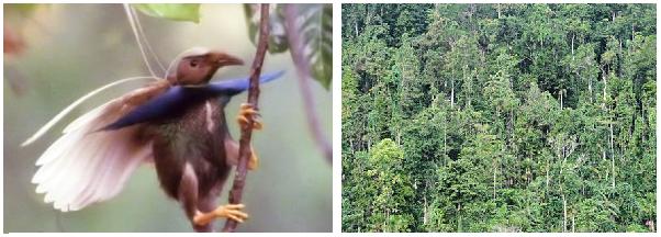 Taman Nasional Aketajawe Lolobata - Wisata Halmahera Timur