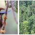Informasi : Taman Nasional Aketajawe Lolobata - Wisata Halmahera Timur, GLOBAL