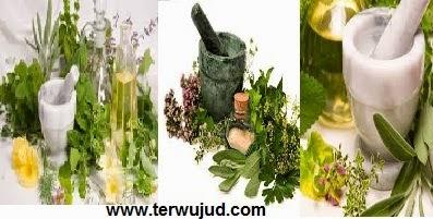 Obat Herbal-Asam Urat