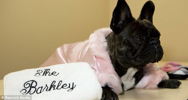 ForAnimalLover: Meet the primped and pampered guests at The Barkley ...