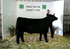 2012 Fifth Place Market Steer