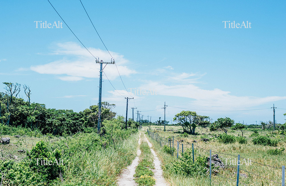 竹富島のあぜ道の写真