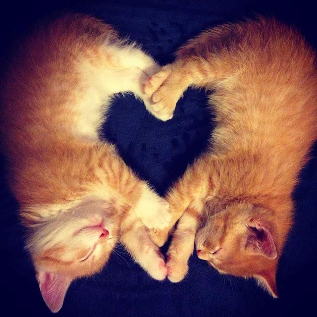 Funny cats - part 82 (40 pics + 10 gifs), cat photo, kittens sleep making heart shape