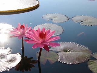 nam hoa thien su, dap an nam hoa