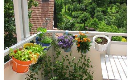 new decorating cultiver un potager sur son balcon. Black Bedroom Furniture Sets. Home Design Ideas