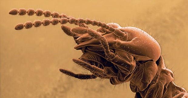 foto close up rayap
