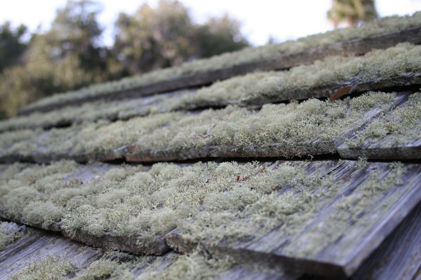 Kingsley Plantation Cedar Shake Roof With Deer Lichen