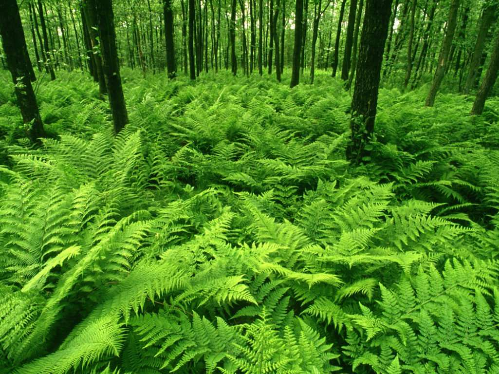 Green Forest Best Wallpapers Images
