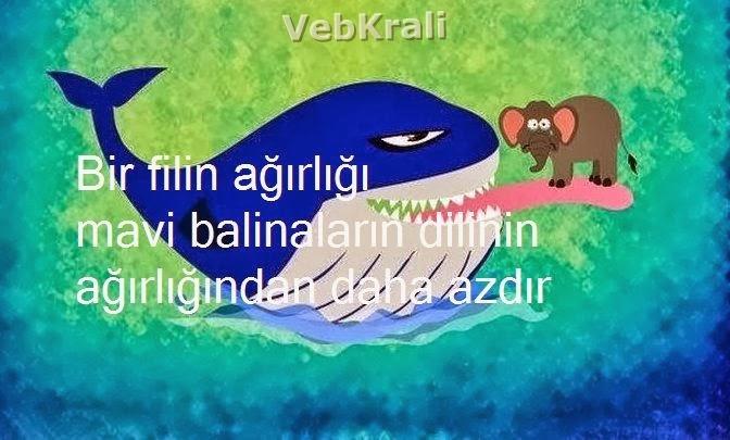 maraqli melumatlar balina