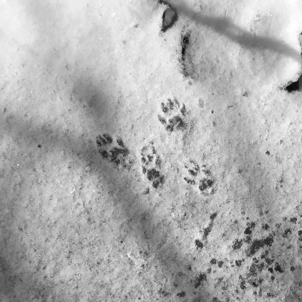 farm dover tracks