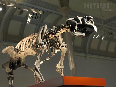 Australian Museum - Dinosaur Bones